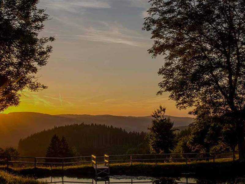 Sunset in Black Forest