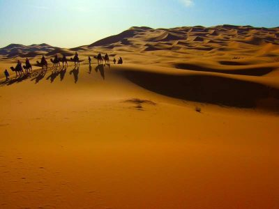 Desert in Morocco with a herd of camels on the background