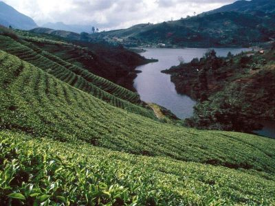 Nuwara Eliya is a city in the tea country hills of central Sri Lanka