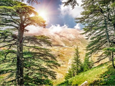 Cedars if God, Lebanon.