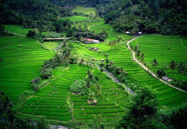 Indonesia 7. Bali